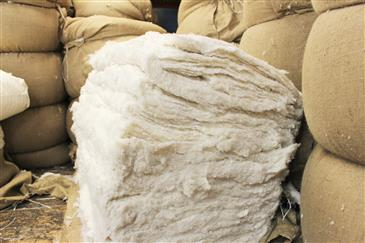White Lotus Home Wholesale Organic Cotton